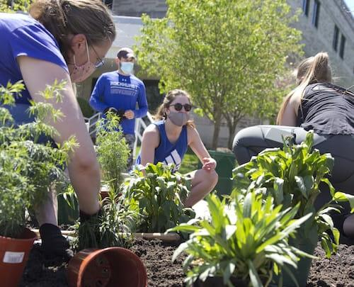 Students and faculty plant a pollinator garden