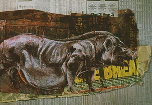 Boar on newspaper