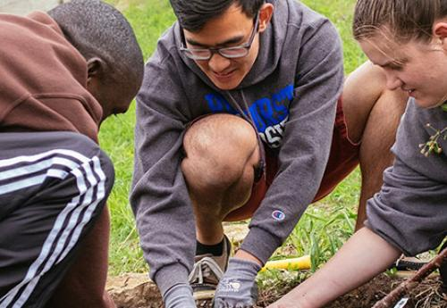 Students planting a tree